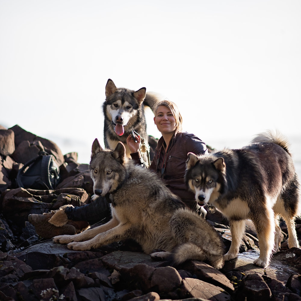 Sarah sitting with Valley (Malamute), Ivar (Upper-Mid content Wolfdog) and Kyro (Husky)