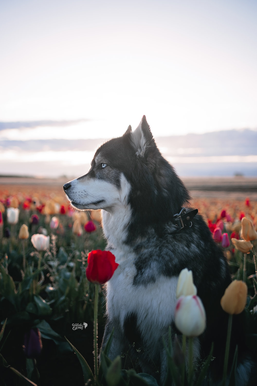 Majestic floofer