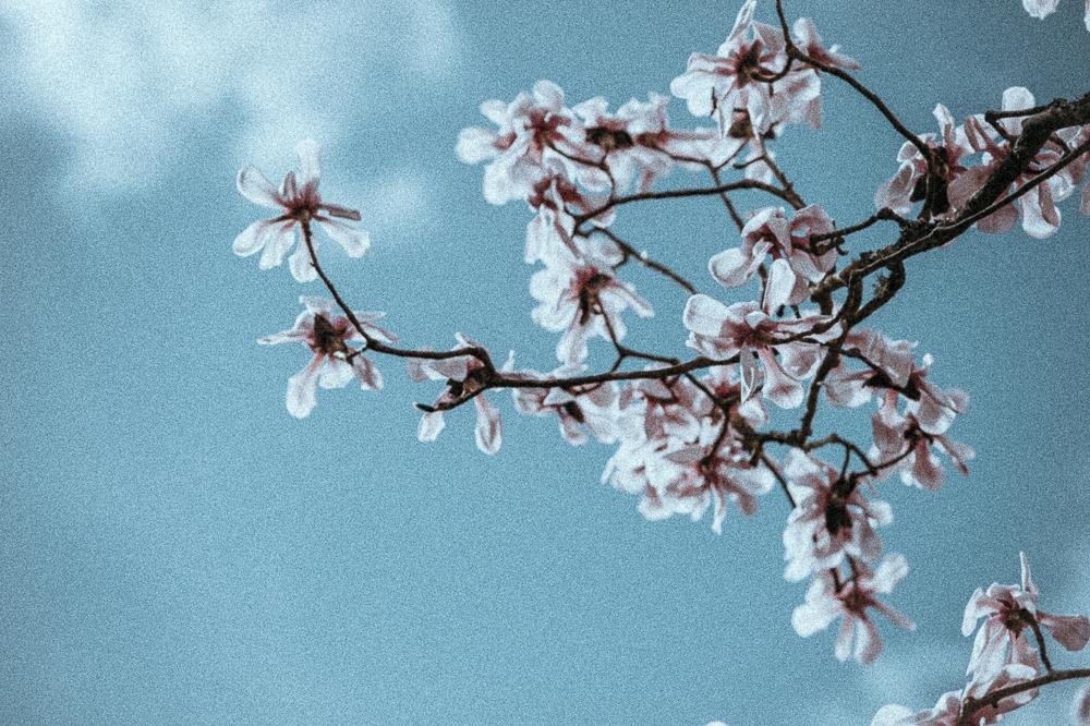 AnnieSpratt-Spring-1-8.jpg