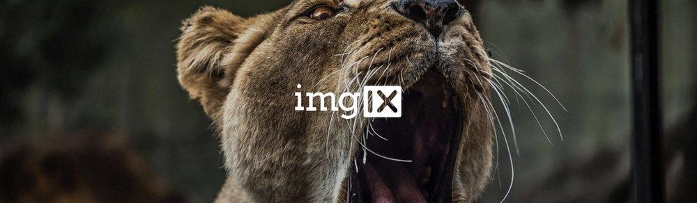 animals and wildlife.jpg