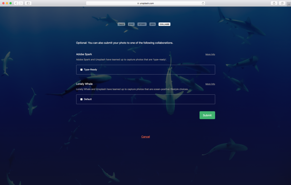 Lonely Whale Curated Collection - Submission Process