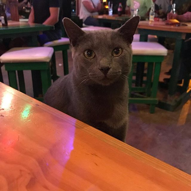 I was just going out by myself for a quick bite but it turned out I wasn't alone at the dinner table 😂😹