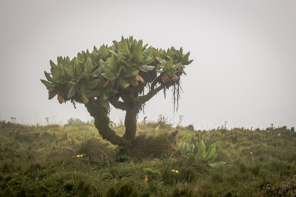This bush technically lies on the Democratic Republic of Congo