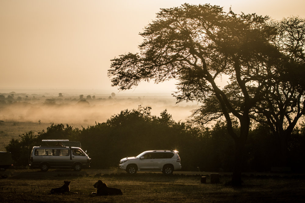 Morning mists call for Safaris and Lions