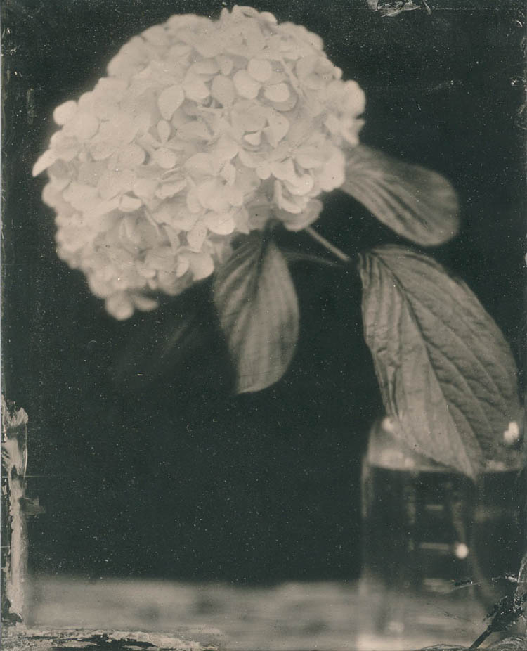 LindseyRoss_StillLife2_tintype_4x5in_650.jpg