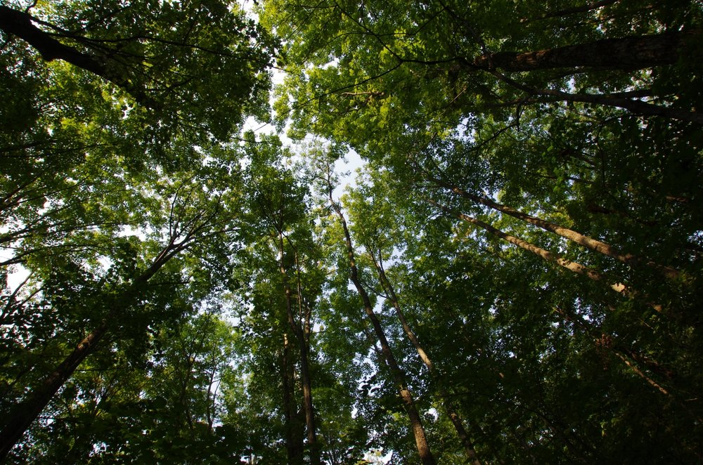 Market and Technology Feasibility - We're able to see the forest for the trees