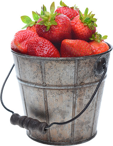 strawberry-bucket.jpg