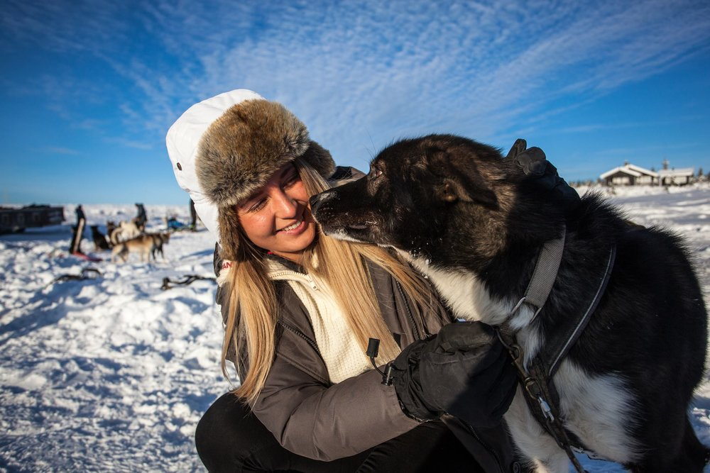 Hundekjøring Lillehammer