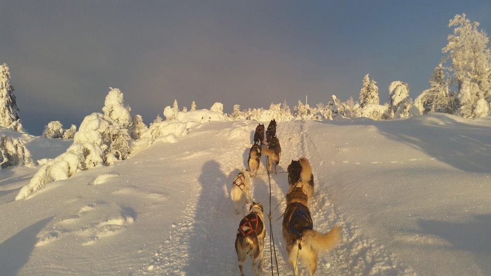 Turistattraksjon Lillehammer