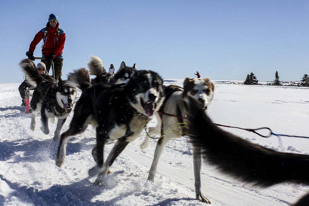 Hundekjøring 2 timer unna Oslo