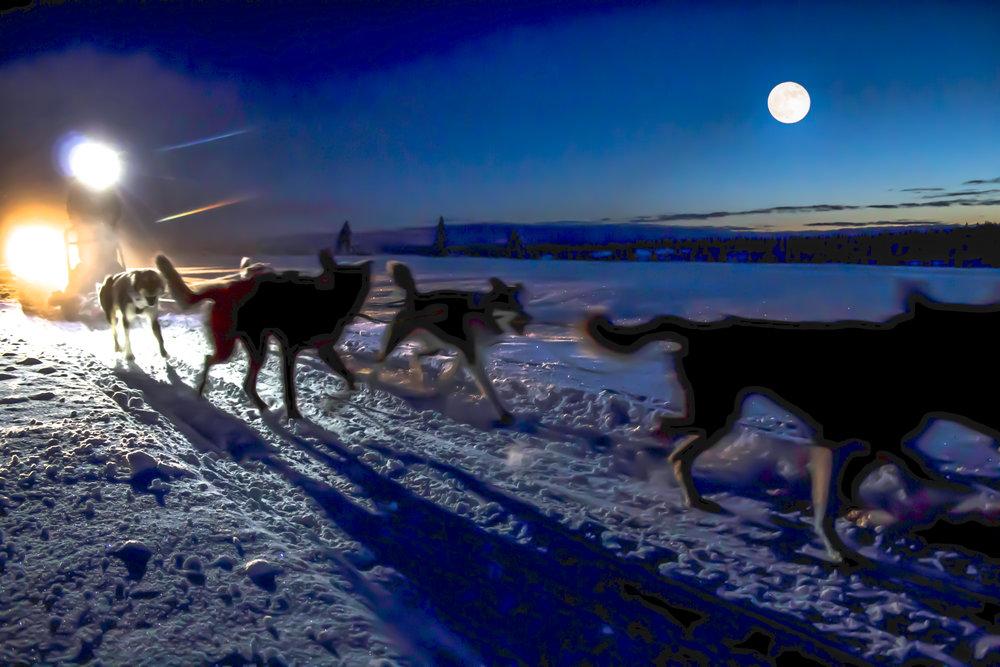 hundekjøring skumring Sjusjøen Husky Tours
