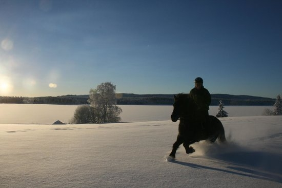 Photo: Mesna Icelandic Horse Center