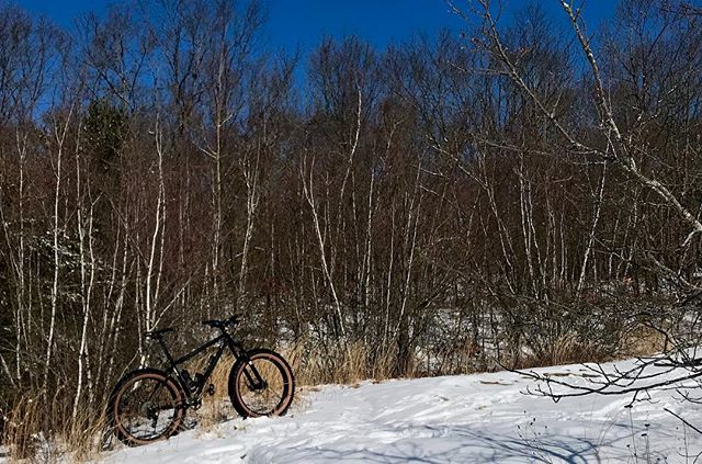 Went to check on the Birch trees. They're good. #surlybikes  #rideyourassoff
