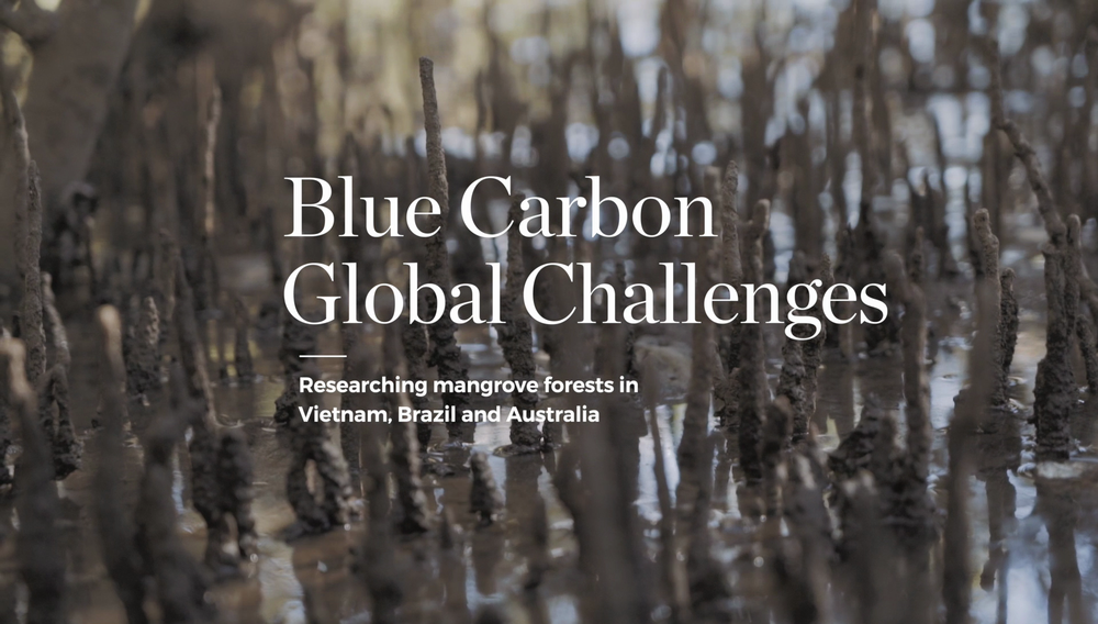UOW GLOBAL CHALLENGES | BLUE CARBON