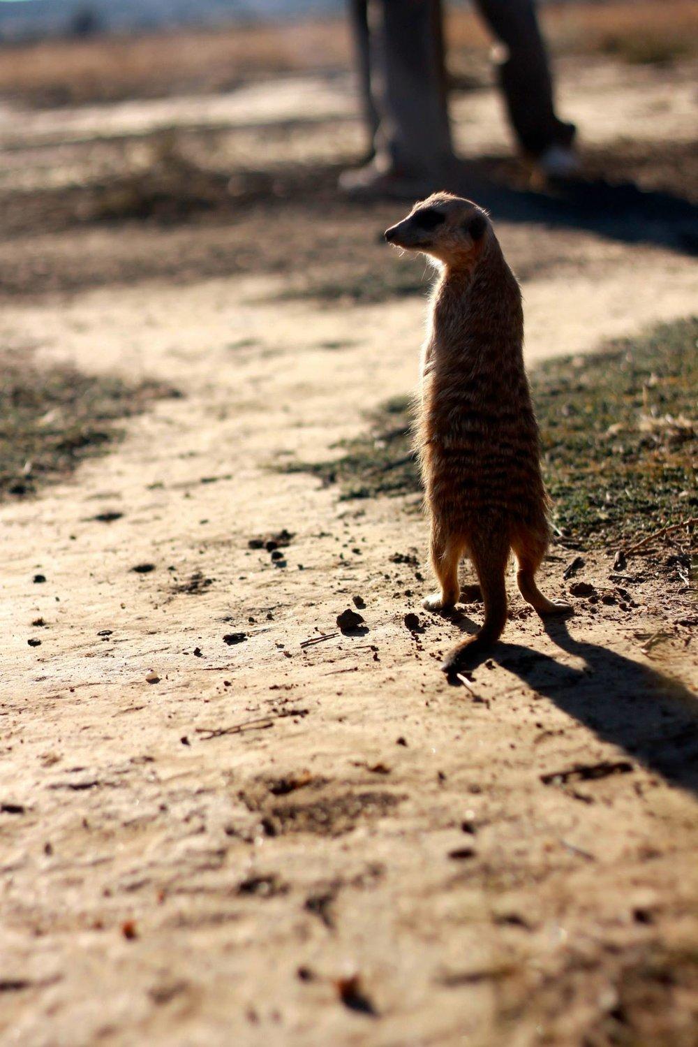 Timone Namibia, 2013
