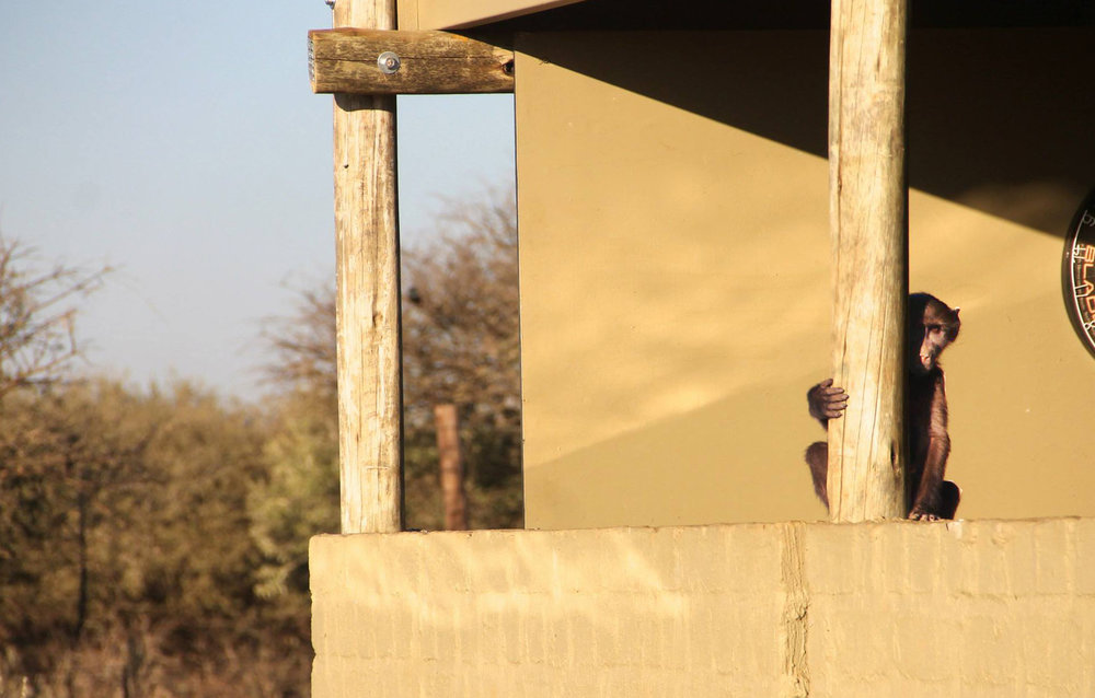Peepin' Cous  Namibia, 2013