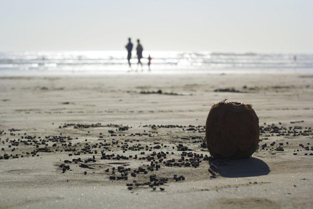 Lonely Coconut  Nosara, 2016