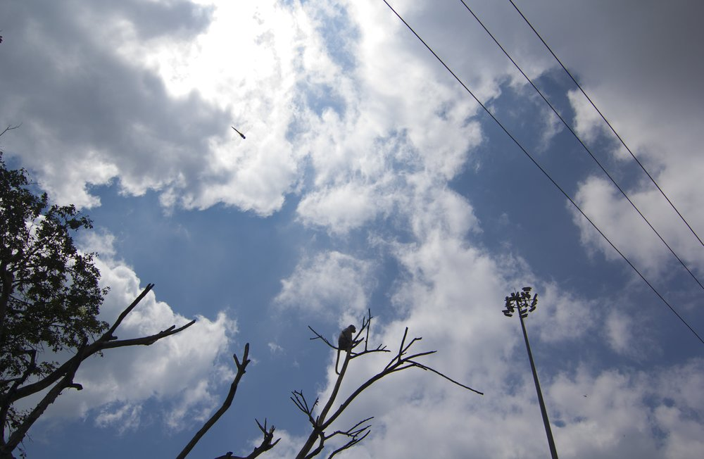 Organic Silhouettes   Mysore, 2017