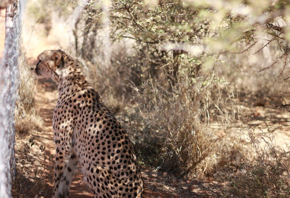 Namibia - N/a'an ku sê Wildlife Sanctuary