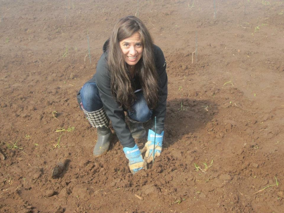 The very first vine planted, 2012