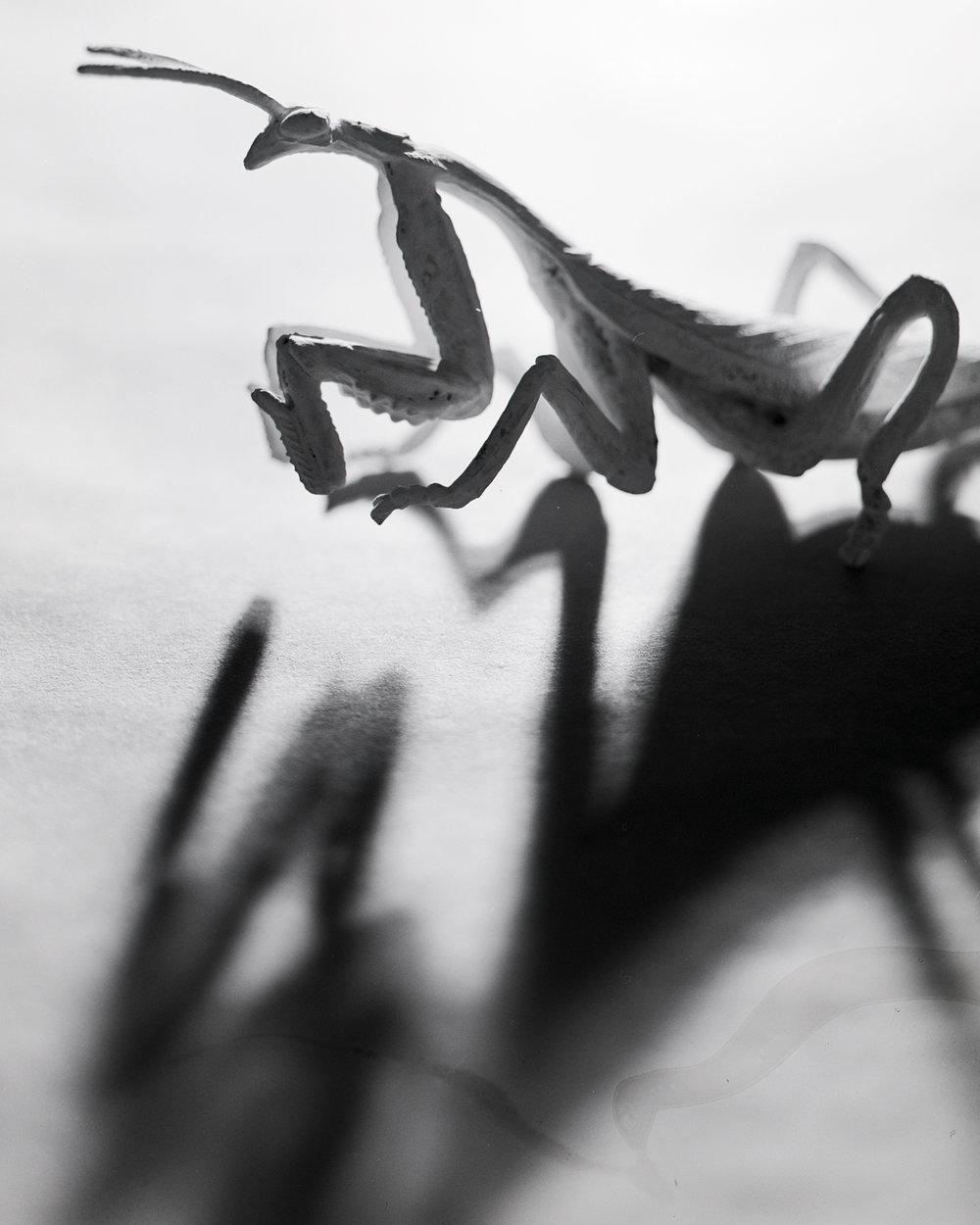 mantis1 internet.jpg