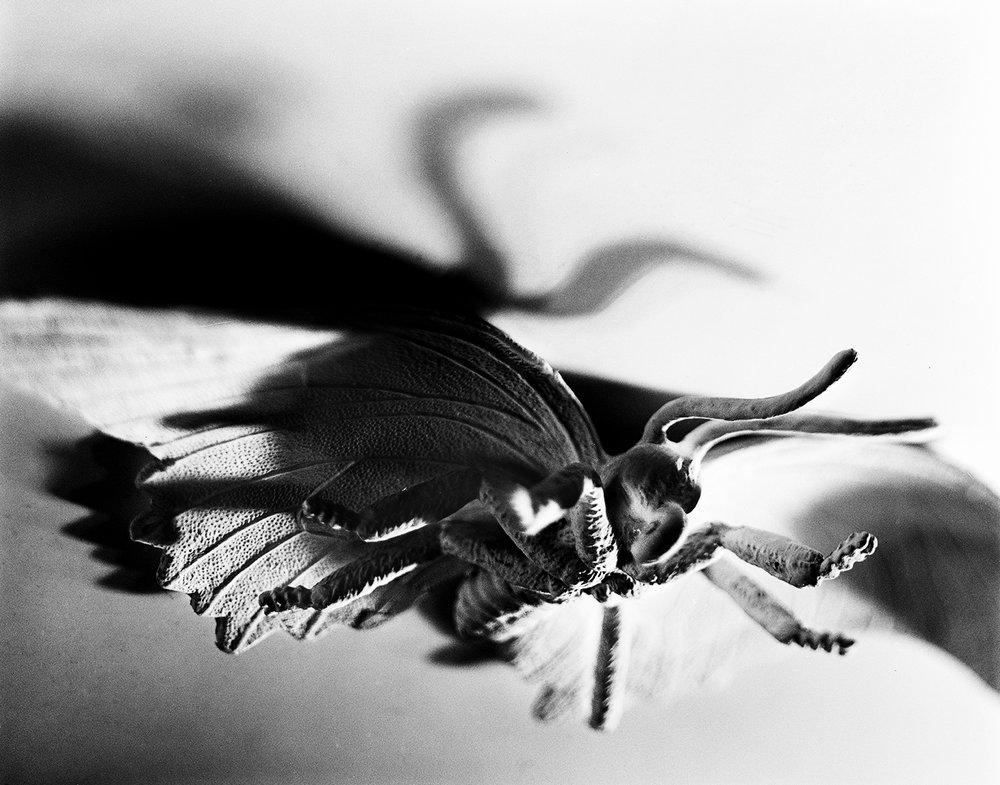 moth2edit internet.jpg