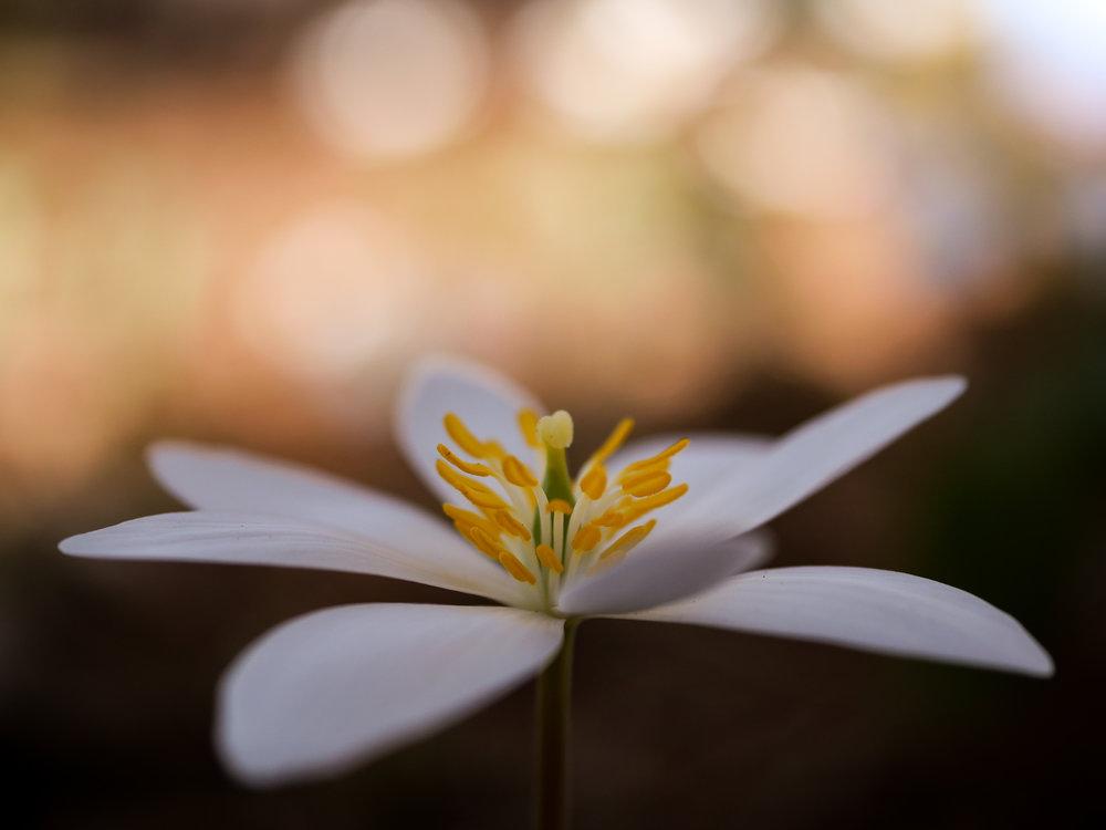 white flower open space alaska