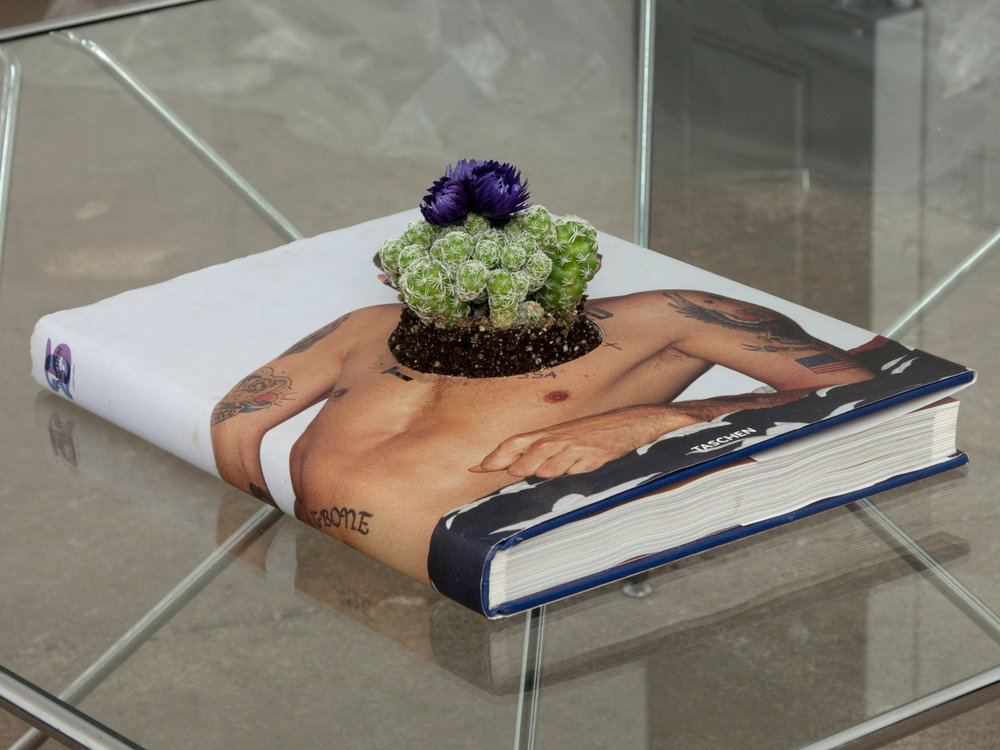 "UPCYCLE   planter for book you now find problematic   13""x 10""x 1.5""  book flowering cactus   2017"