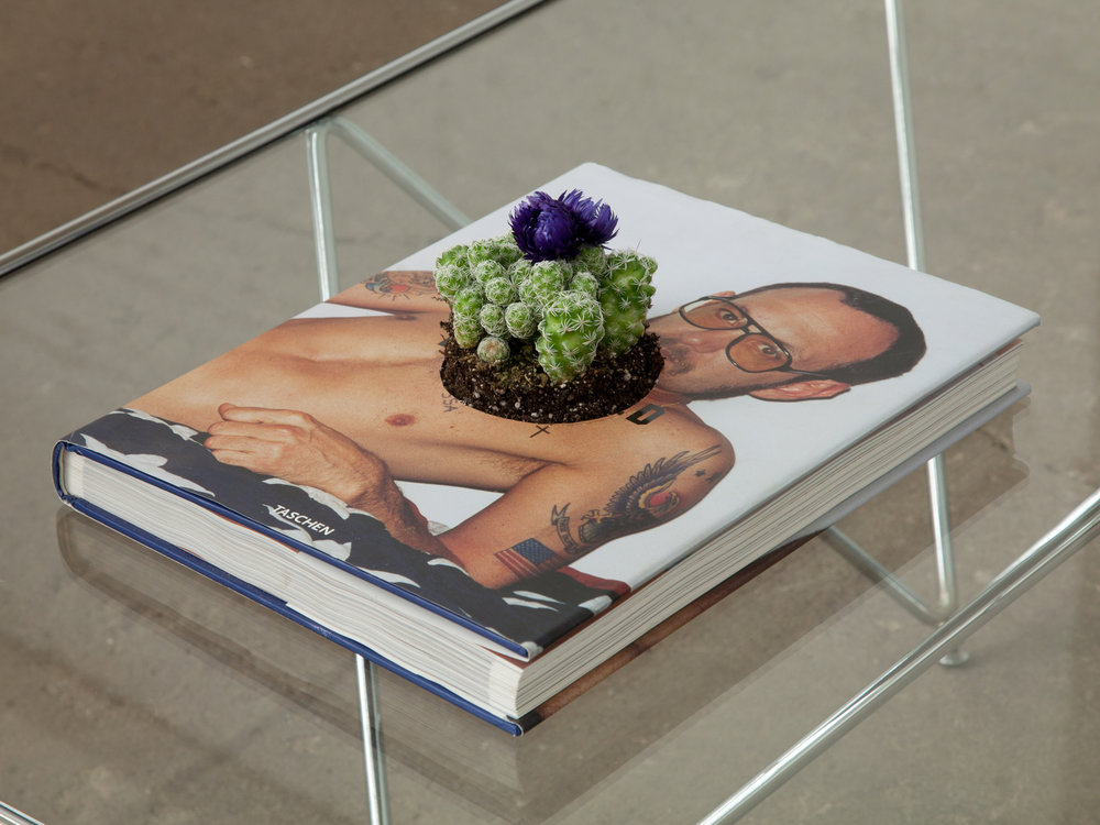 """UPCYCLE   planter for book you now find problematic   13""""x 10""""x 1.5""""  book flowering cactus  2017"""