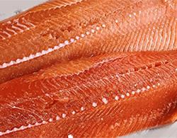 coho_salmon.jpg