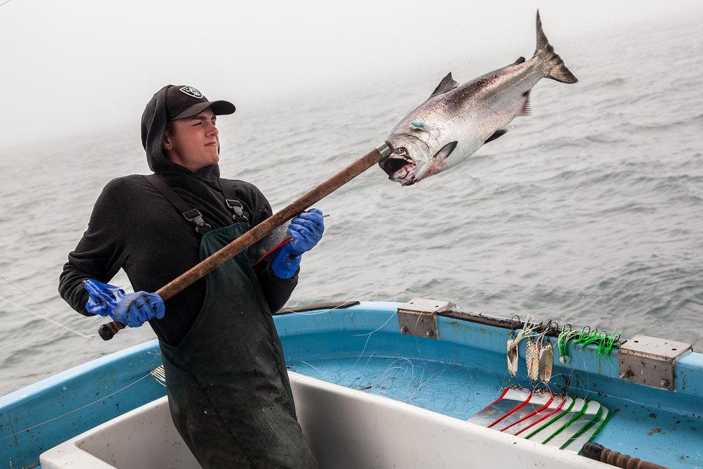 Salmon-Trolling_Caught1.jpg