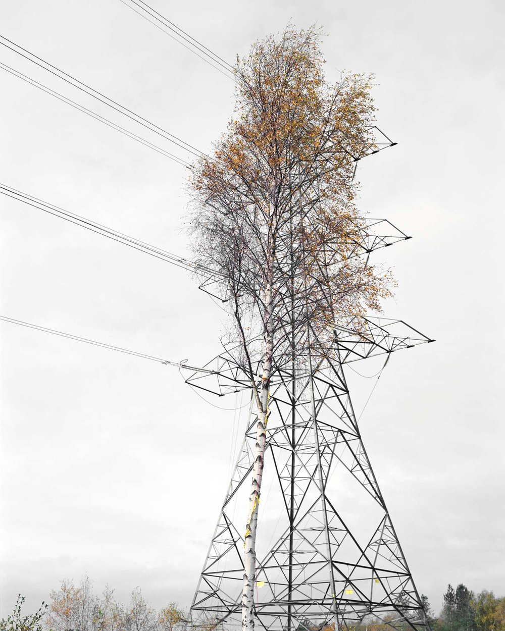 Birch & Steel, Pigment Print, 152 x 122 cm, 2008, Edition of 7