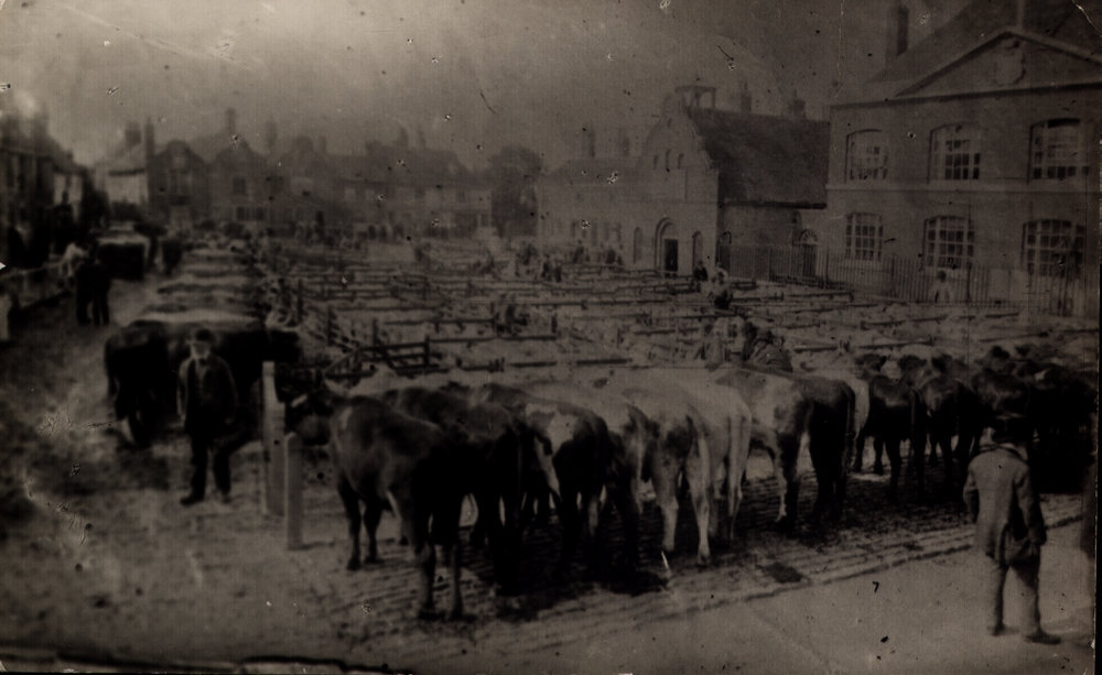Cattle Market BPA00041