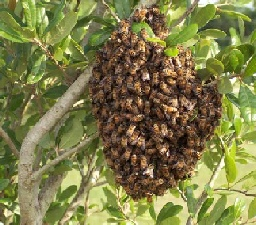 Swarm in a tree