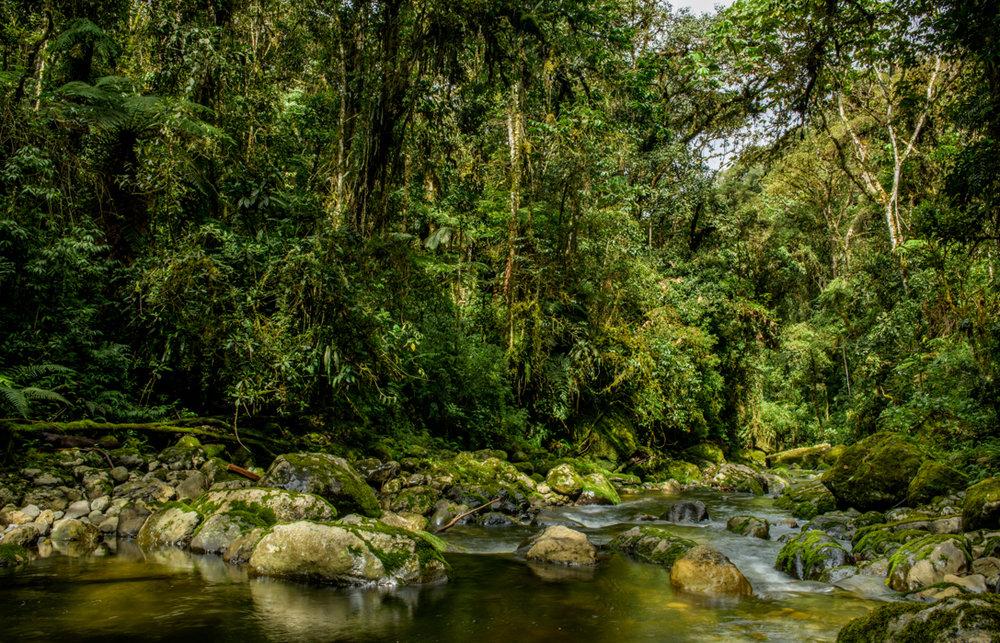 Vista Alegre Omia Regional Conservation Area