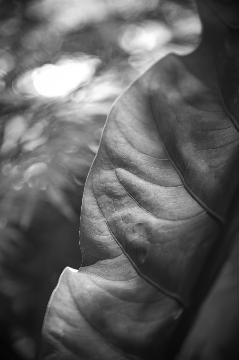 DOC_4775_Inhotim Leaves #7.jpg