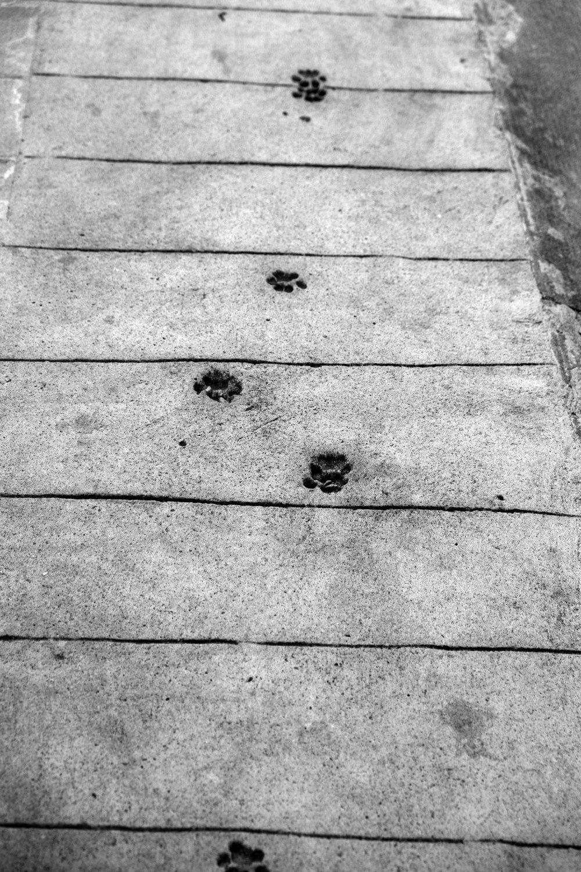 Wet Concrete,  Menton