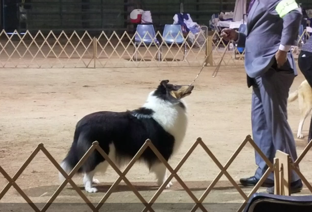 Duchess - Georgetown show 10 mths old.png