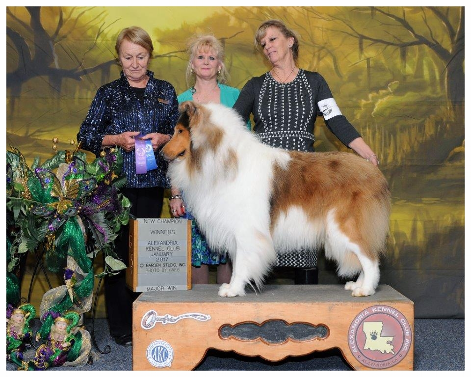 """INT. CH/AM CH Afterhours Chain of Command """"Gunner"""" 23 mths old  """"Finished his """"CHAMPIONSHIP""""!!"""