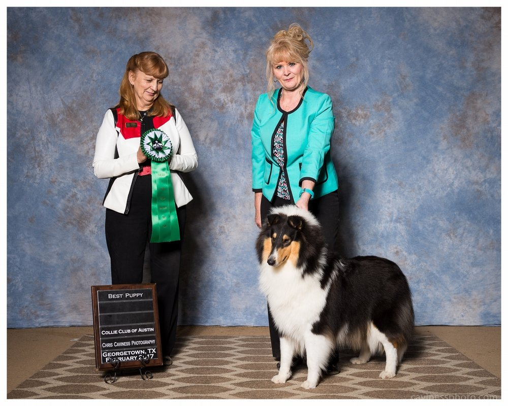 """Commanders Diva in Silk Stockings of JJaed's """"Duchess"""" 10 months old  """"Best Puppy""""    """"Austin Club Specialty Show"""""""