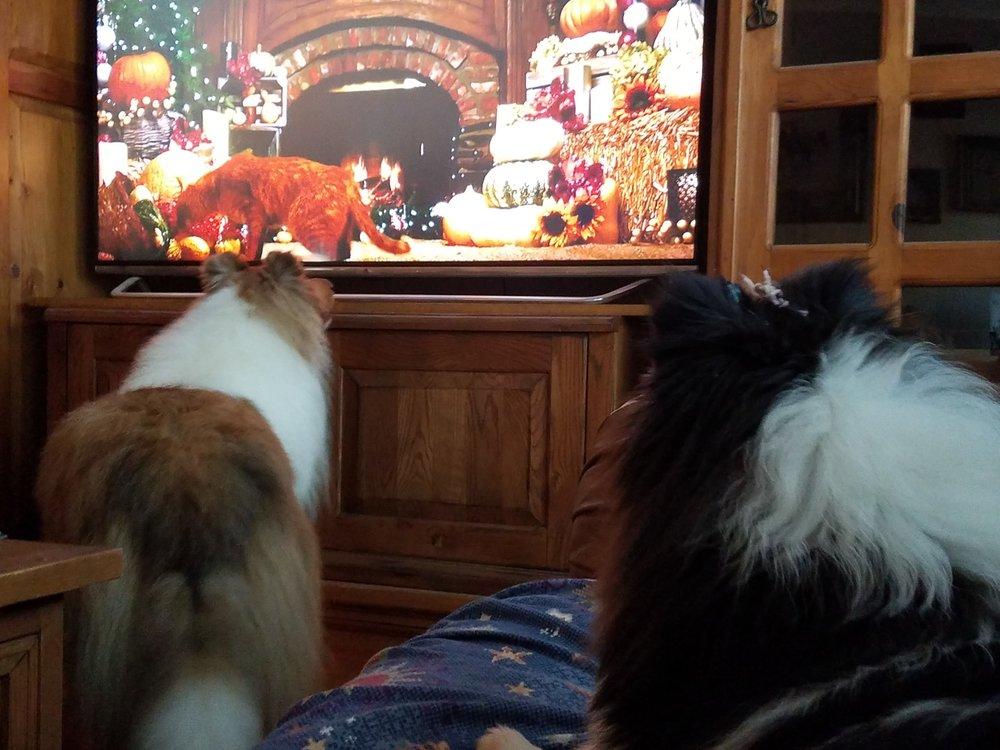 watching xmas specials on tv 12-2015.jpg