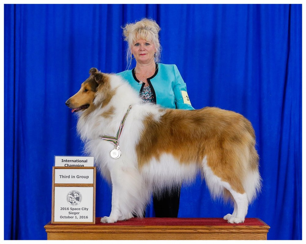 """INT. CH/AM CH Afterhours Chain of Command """"Gunner""""  Earned his  """"International Championship""""  also took  """"3rd In Group"""""""