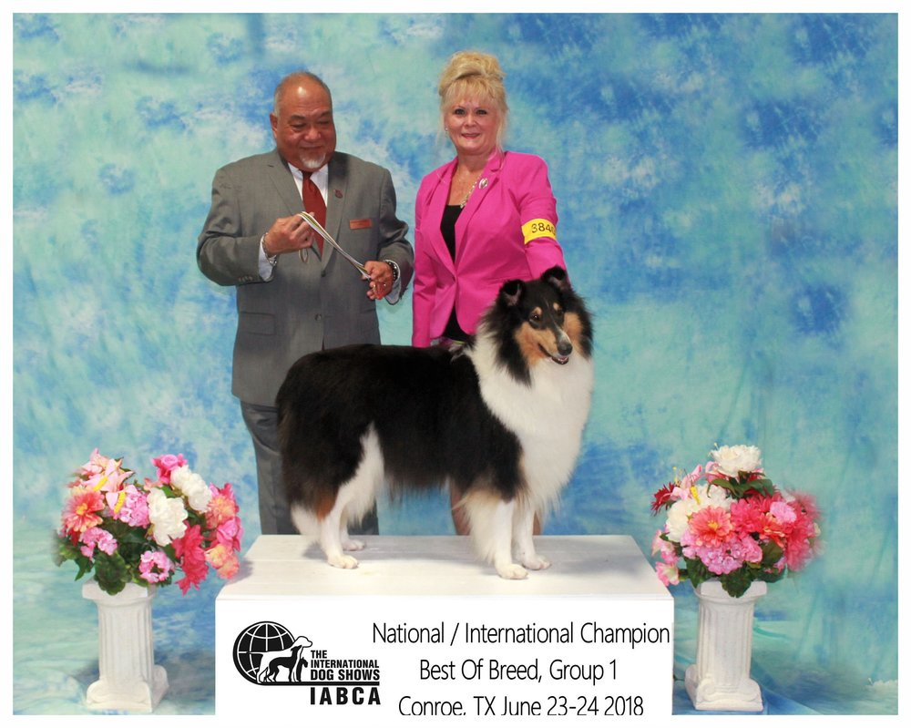 """INT CH  Commanders Diva in Silk Stockings of Jjaeds   """"Duchess""""   """"Best of Breed Group 1"""""""