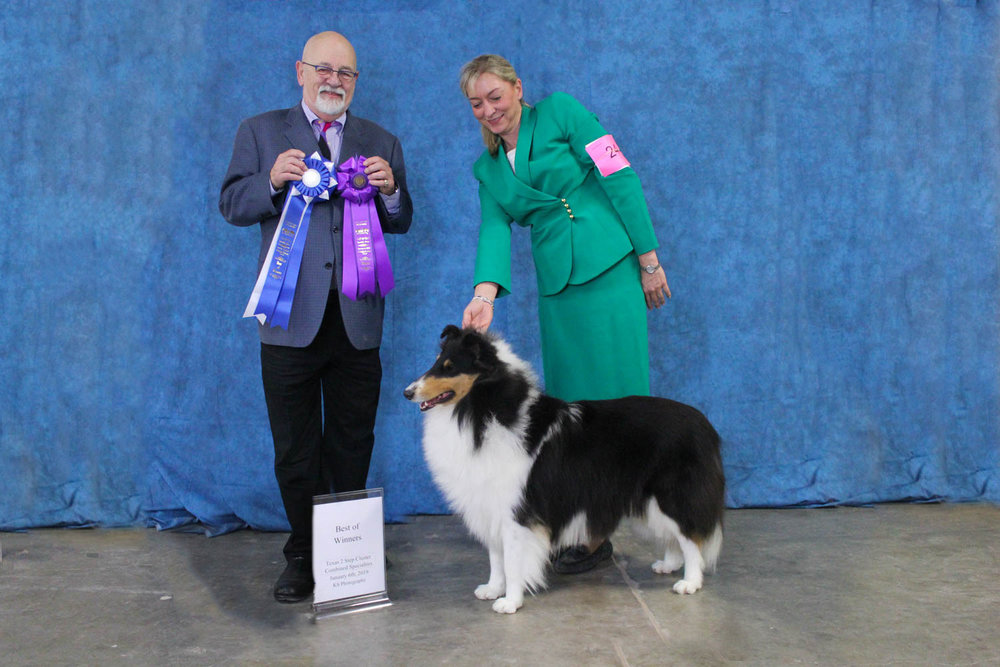 """INT CH  Commanders Diva in Silk Stockings """"Duchess"""" won  WB!!  and  BOW!!  for a """" 4 pt Major""""  and also she won 2 """" Major Reserves""""  at the Austin Collie Show"""