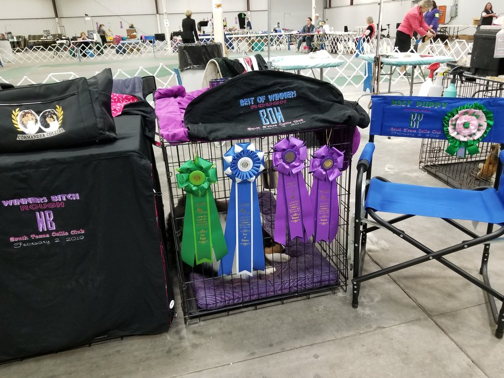 Duchess and Lexis prizes and ribbon S. Tx Collie Club and San Antonio Specialty Show Feb 2nd and 3rd.jpg