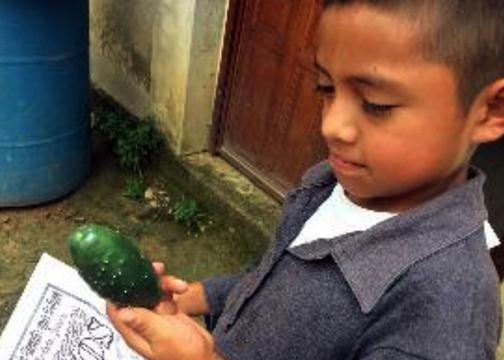 oaxaca_farmer_cucumber.png