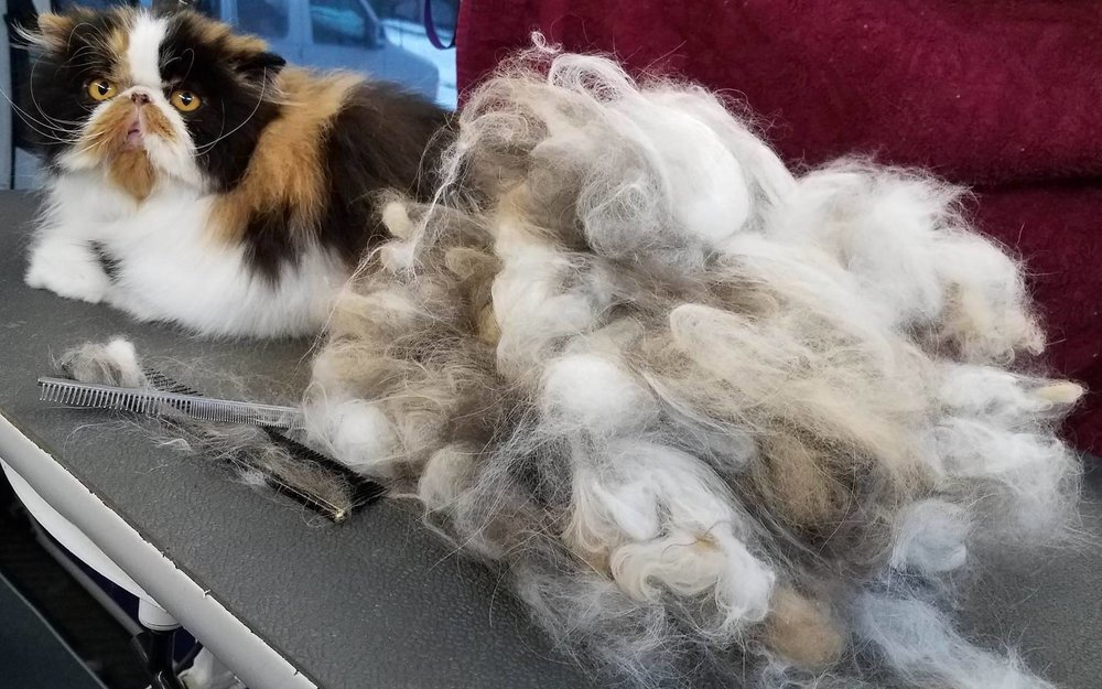 cat shedding package groom NJ