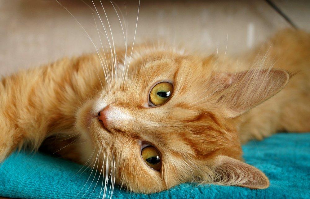 animal-cat-close-up-416195.jpg