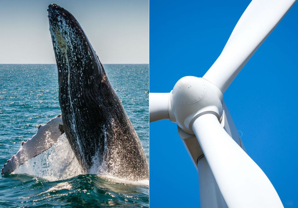 whale-blade.jpg.1000x0_q80_crop-smart.jpg