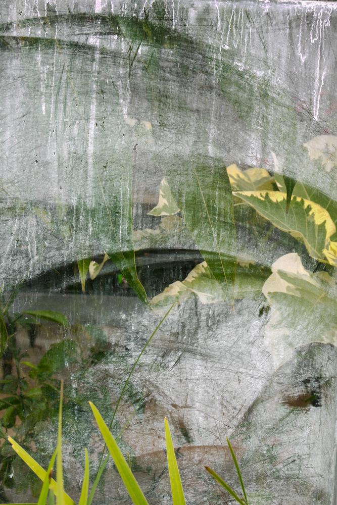 Moist Greenhouse Window